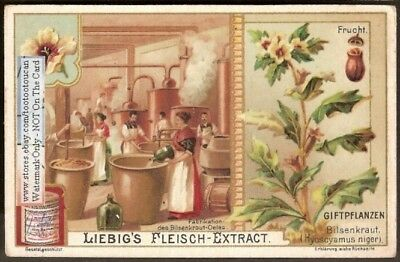 Poisonous Plants - Henbane Drugs Medicine  Pharmacy 1903 Card g