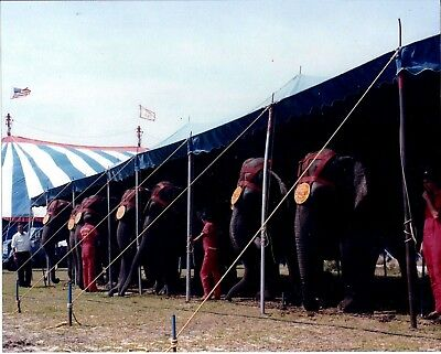 1985 - Clyde Beatty - Cole Bros Circus Elephant Tent w/ Fred Logan