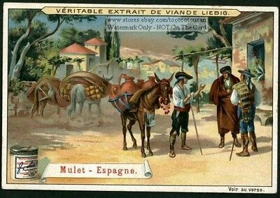 Mule In Spain Loaded With Jugs NICE 1899 Trade Ad Card