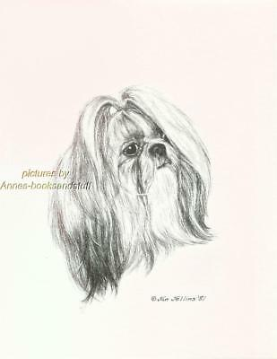 #280 SHIH TZU portrait dog art print * Pen and ink drawing by Jan Jellins
