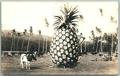PINEAPPLE w/ COWS EXAGGERATED ANTIQUE REAL PHOTO POSTCARD RPPC
