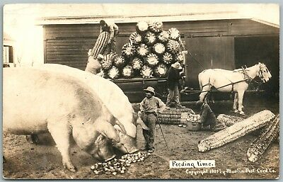 Exaggerated Corn Pigs 1913 Antique Real Photo Postcard Rppc Photomontage