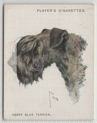 Kerry BlueTerrier Dog Canine Pet 1920s  Ad Trade Card