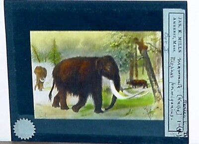 Vintage Glass Slide/wooly Mammoth