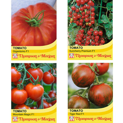 Tomato Seed Packets Hybrid Garden Plants 4 - 50 Seeds Options Tomatoes T&M