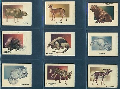 1951 TOPPS ANIMALS OF THE WORLD NEAR SET LOT 54/100 NON SPORT TRADING Cards