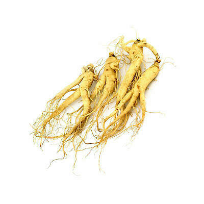 WOHO Cultivated Fresh American Ginseng (Extra Jumbo) 8oz 3-5 roots FREE Shipping