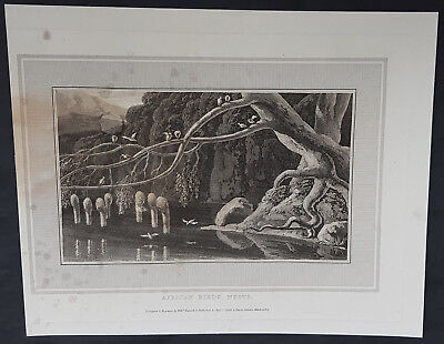 1809 William Daniell Antique Print of African Colony Birds Nests