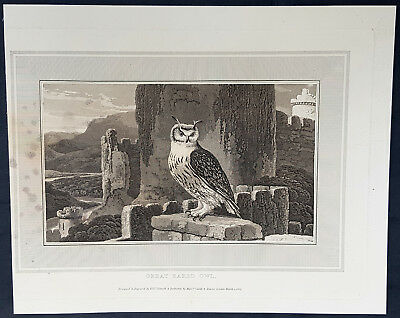 1809 William Daniell Antique Print of The Great Horned Owl - Bubo virginianus