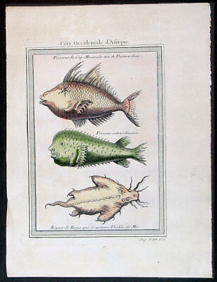 1755 Prevost & Schley Original Antique Print of Fish & Sea Ray, West Africa