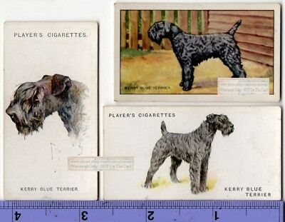 Kerry Blue Terrier Dogs 3 Different Vintage Ad Trade Cards 2nd