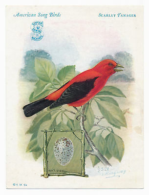 Scarlett Tanager, American Song Birds, Singer Sewing Machine Vintage Trade Card