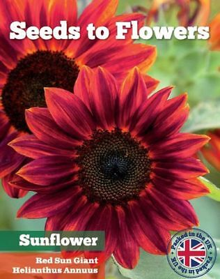 Red Giant Sunflower - Red Sun -  Helianthus Annuus - 40 Fine Flower Seeds /100F