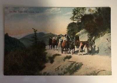 Postcard Vintage - On The Trail Mt Lowe  California Horses Donkeys - Unposted
