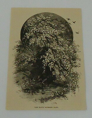 1887 small magazine engraving ~ EARLY SUMMER DAYS, flowers + water