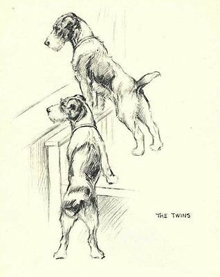 Wire Fox Terrier T - Vintage Dog Print - 1948 KF Barker