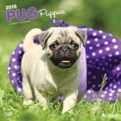2019 Pug Puppies Dog Wall Calendar 12x12 by BrownTrout