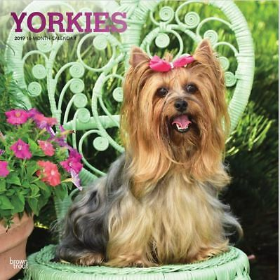 2019 Yorkies Dog Wall Calendar 12x12 by BrownTrout Yorkshire Terrier