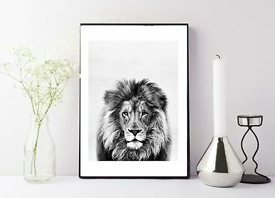 black and white vintage lions head photography print/poster