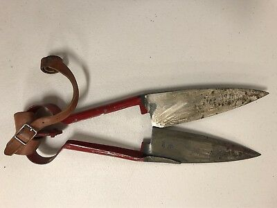 """Vintage ward made in England #4400 Sheep Shears Clippers Trimmer 14.5"""" total"""