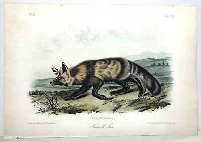 151 ~ JACKAL FOX ~ Audubon 1st First Edition Octavo Quadrupeds Animal Art Print