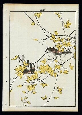 1892 Orig JAPANESE WOODBLOCK PRINT IMAO KEINEN  Bird & Flower - Long Tail Tit