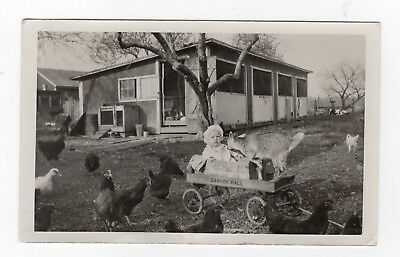 Baby Amidst Farm ANIMALS in Cannon Ball WAGON Odd Funny Vtg Old 1910s PHOTO