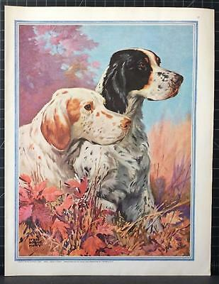 1932 Springer Spaniel Portrait Lynn Bogue Hunt Dogs in a Big Way SEP Article