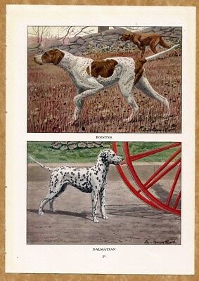 Pointer and Dalmation Dog Print by Fuertes 1919