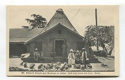 Simla - Fakeer's Temple and Monkeys on Jakko - old India postcard