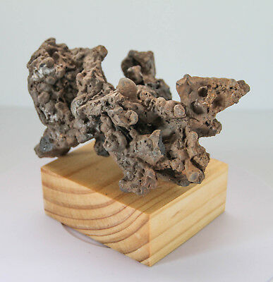 """""""THE CORAL""""Abstract Sculpture. Unclassified Meteorite/Impact Melt Rock"""