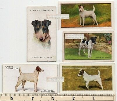 Smooth Coated Fox Terrier Dog 5 Different Vintage Ad Trade Cards 2nd