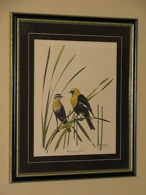 Vintage Ray Harm Yellow-Headed Blackbird Signed Framed Print, Plate XLIII
