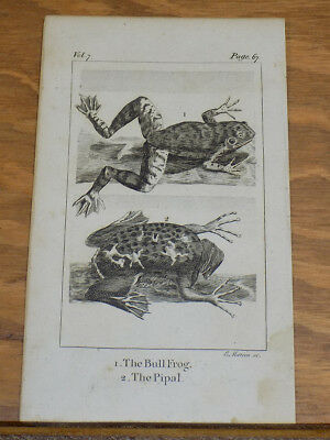 1791 Antique Animal Print///BULL FROG, and PIPAL