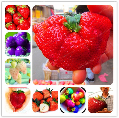 100 Pcs Seeds Strawberry Bonsai Giant Strawberries Plants Fruit Sweet Garden NEW