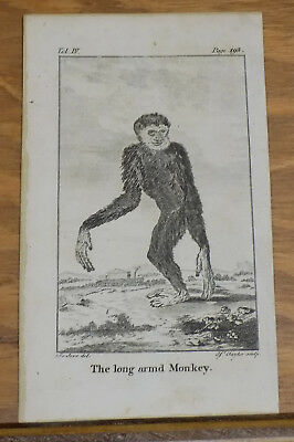 1791 Antique Animal Print///LONG-ARMED MONKEY
