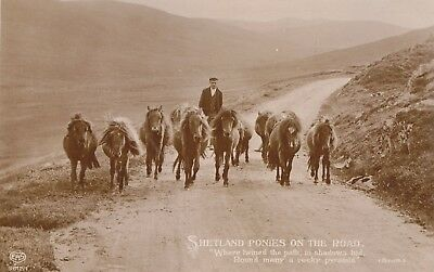 Scotland - Shetland ponies on the road, real sepia photo postcard by EAS 1911