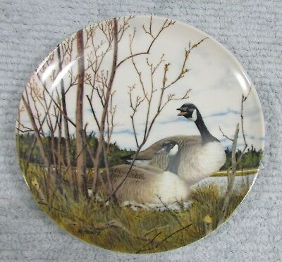 Canada Goose Nesting Donald Pentz Art Old 1986 Dominion Collector Plate FREE S/H
