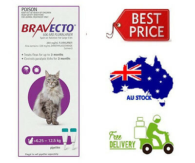 BEST PRICE - Bravecto Spot On for Cats 6.25 - 12.5kg - 4 Doses - NEW