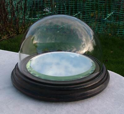 Antique Treen Wooden Domed Glass Top Display Case Stand Mirrored Base