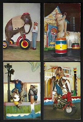 Lot of 4 1956 Postcards, Performing Animals, Animal Acts, St. Louis Zoo