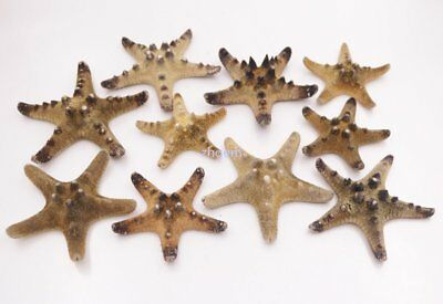 10 PCS 55-70mm Natural Dry Starfish Specimen Shell Collectibles Decorations