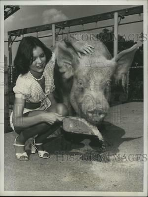 1976 Press Photo Sally Beck Feeding Prize Hog Before New Jersey State Fair