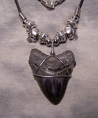 1 11/16 Megalodon Shark Tooth Teeth Necklace Fossil Jaw Megalodon Scuba Fishing