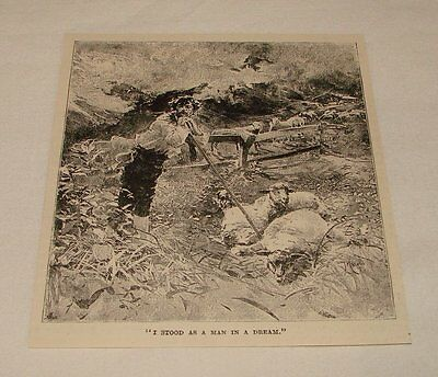 1893 magazine engraving ~ MAN IN FIELD WITH SHEEP