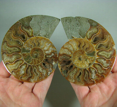 "4.1"" AMMONITE FOSSIL Split Polished Pair w/ Calcite Chambers - Madagascar"