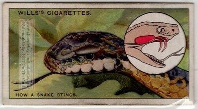 How Snake Fangs Work To Inject Poison 80+  Y/O Ad Trade Card
