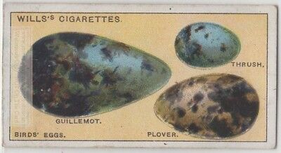 Why Different Bird Species Have Different Shaped Eggs 95+  Y/O Ad Trade Card
