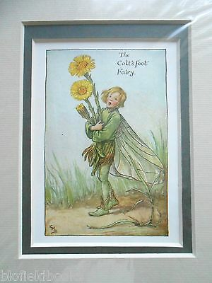 CICELY MARY BARKER - The Colt's Foot Flower Fairy - Vintage Double Mounted Print
