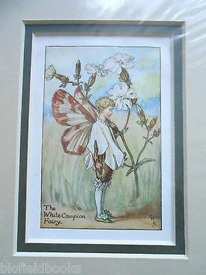 CICELY MARY BARKER - The White Campion Flower Fairy Vintage Double Mounted Print